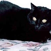 Adopt A Pet :: Lilli - Medway, MA