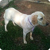 Adopt A Pet :: BayLee - Cumming, GA