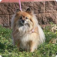 Adopt A Pet :: Lexi - Gilbert, AZ