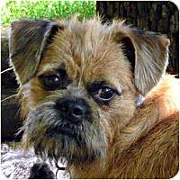 Adopt A Pet :: JUNE in Madison, WI - Sun Prairie, WI