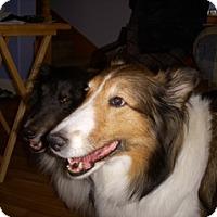 Adopt A Pet :: Lily - La Habra, CA