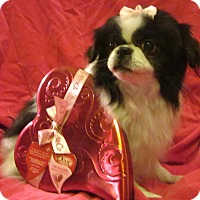 Adopt A Pet :: Kieko - Aurora, CO