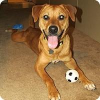 Adopt A Pet :: Daphy - New Orleans, LA