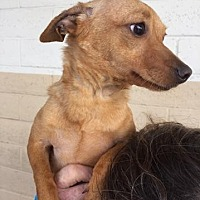 Adopt A Pet :: Chiquita - Fresno, CA