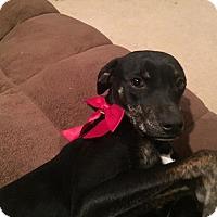 Adopt A Pet :: Gracie - Aurora, CO