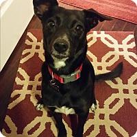 Adopt A Pet :: Midge - Allison Park, PA