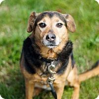 Adopt A Pet :: Cleo - Columbia, TN