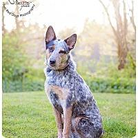 Adopt A Pet :: Sprocket - Seattle c/o Kingston 98346/ Washington State, WA