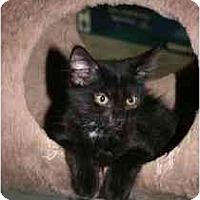 Adopt A Pet :: Eleanor - Marietta, GA