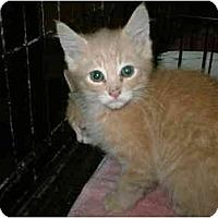 Adopt A Pet :: Dagwood - Warren, OH