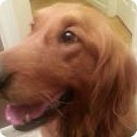 Adopt A Pet :: Gemma - Denver, CO