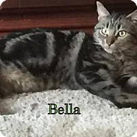 Adopt A Pet :: Bella - Weatherford, OK