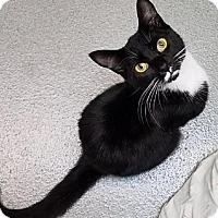 Adopt A Pet :: Jem - Westminster, CA