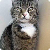 Adopt A Pet :: Koa - Oswego, IL
