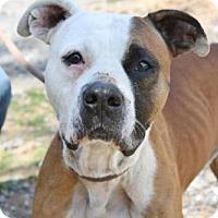 Adopt A Pet :: Huck - Front Royal, VA
