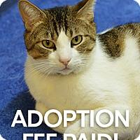 Adopt A Pet :: Alyx - Novato, CA