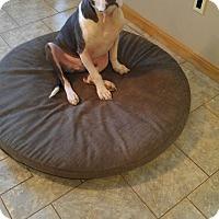 Adopt A Pet :: Lamb Chop - East Randolph, VT
