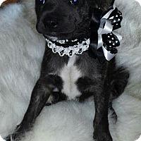 Adopt A Pet :: Wasabi - Johnson City, TN