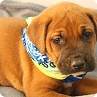 Adopt A Pet :: Sam - South Jersey, NJ