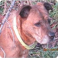 Adopt A Pet :: Mimi - Covington, KY