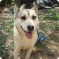 Adopt A Pet :: Piper - Redmond, WA