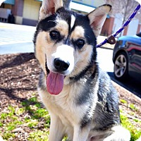 Adopt A Pet :: Ares - Roswell, GA