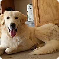 Adopt A Pet :: Diana - Scottsdale, AZ