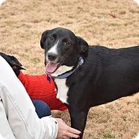 Adopt A Pet :: Buddy - Brattleboro, VT