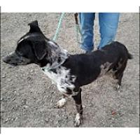 Adopt A Pet :: CHAYTON - Elk Grove, CA