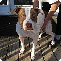 Adopt A Pet :: Cinderella - cleveland, OH