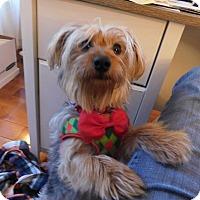 Adopt A Pet :: Abigail - West Deptford, NJ