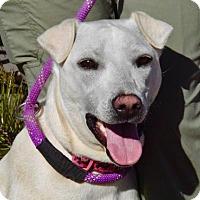 Adopt A Pet :: Blondie - Payson, AZ