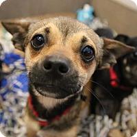 Adopt A Pet :: Andy - Alpharetta, GA