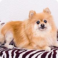 Adopt A Pet :: Mena - Dallas, TX