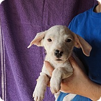 Adopt A Pet :: Allie - Oviedo, FL