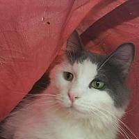 Adopt A Pet :: Neville - Park Falls, WI