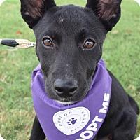 Adopt A Pet :: Roxie - Aubrey, TX