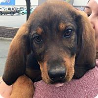 Adopt A Pet :: Larry - Louisville, KY