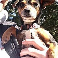 Adopt A Pet :: Pixie - Lancaster, OH