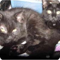 Adopt A Pet :: Onyx - Riverside, RI