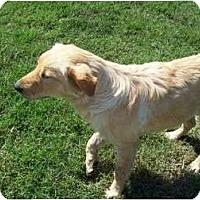 Adopt A Pet :: Sandi - Glastonbury, CT