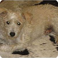 Adopt A Pet :: Logan in Houston - Houston, TX