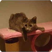 Adopt A Pet :: Harriet - Muncie, IN
