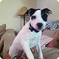 Adopt A Pet :: Dobby - Blanchard, OK