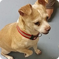 Adopt A Pet :: Riley - Brooklyn, NY