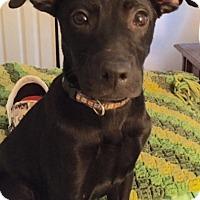 Adopt A Pet :: Calliope - Destrehan, LA