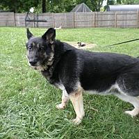 German Shepherd Dog Mix Dog for adoption in Pataskala, Ohio - Wesley