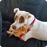 Adopt A Pet :: Koko - Ft. Lauderdale, FL
