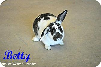Mini Lop Mix for adoption in Hamilton, Ontario - Betty