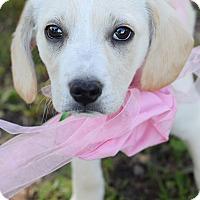 Adopt A Pet :: Truly - Denver, CO